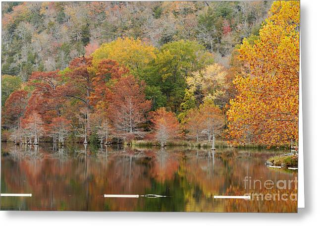 Mountain Fork Greeting Cards - Bald Cypresses and Sycamore - Beavers Bend State Resort Park - Broken Bow Oklahoma Greeting Card by Silvio Ligutti