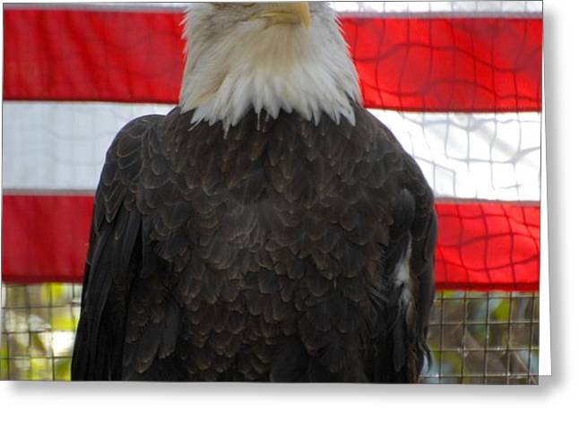 Bald Eagle 265 Greeting Card by Joyce StJames