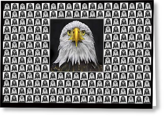 Gold Lime Green Greeting Cards - Bald Eagle Greeting Card by Adrian Campfield