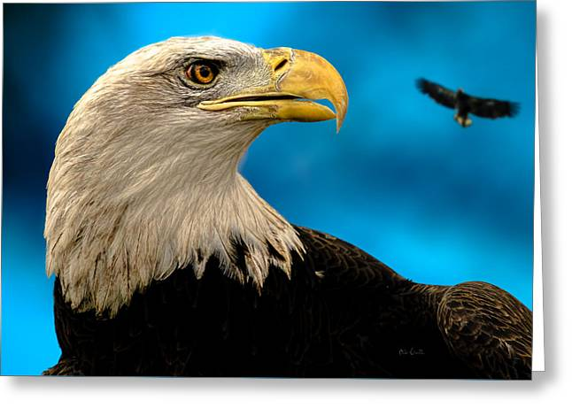 Bald Eagle And Fledgling  Greeting Card by Bob Orsillo