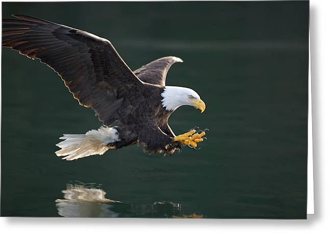 Dexterity Greeting Cards - Bald Eagle catching fish Greeting Card by John Hyde