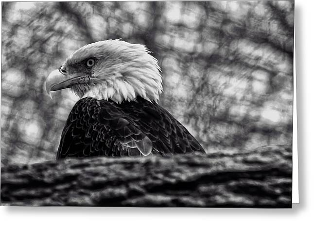 Bald Eagle Greeting Card by Chris Flees