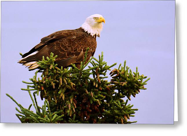 Birds Pyrography Greeting Cards - Bald Eagle Greeting Card by Debra  Miller