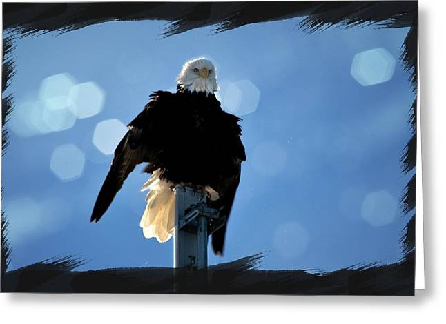 Eagle Images Greeting Cards - Bald Eagle Dreaming Greeting Card by Debra  Miller