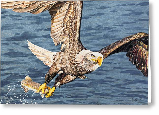 Cutthroat Greeting Cards - Bald Eagle fishing  Greeting Card by Aaron Spong