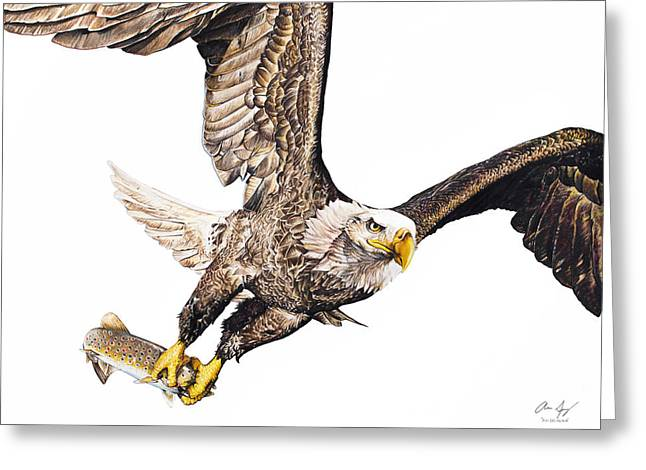 Photorealistic Greeting Cards - Bald Eagle Fishing White Background Greeting Card by Aaron Spong