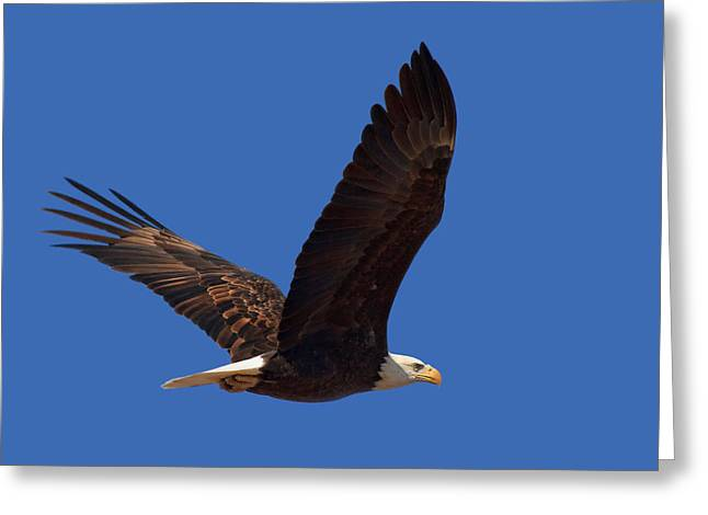 Spirit Bird Greeting Cards - Bald Eagle Fly By Greeting Card by Beth Sargent