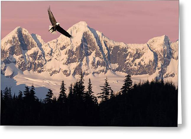 Juneau Park Greeting Cards - Bald Eagle In Flight At Sunset With Greeting Card by John Hyde