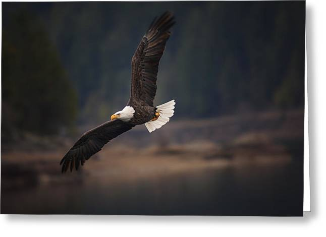 Bald Eagle In Flight Greeting Card by Mark Kiver