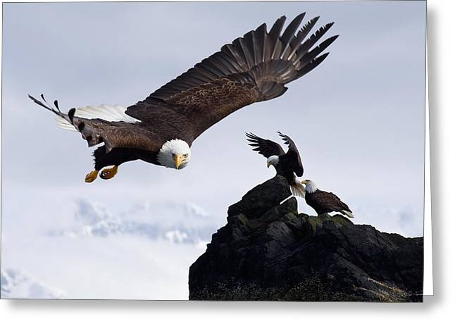 Ledge Photographs Greeting Cards - Bald Eagle In Flight Next To Ledge Greeting Card by John Hyde