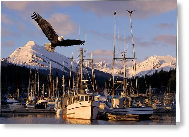 Juneau Park Greeting Cards - Bald Eagle In Flight Through Auke Bay Greeting Card by John Hyde