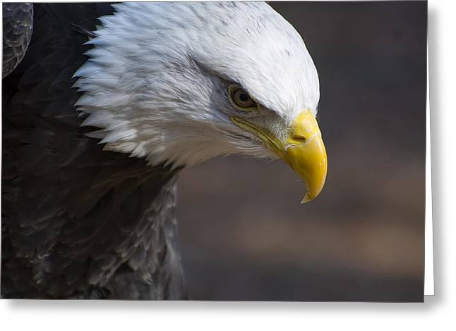 Bald Eagle Landing Greeting Card by Chris Flees