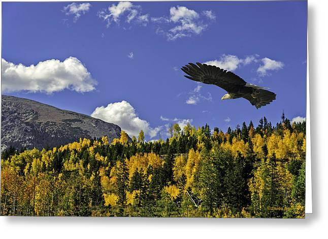 D700 Greeting Cards - Bald Eagle over the Aspen Greeting Card by Stephen  Johnson