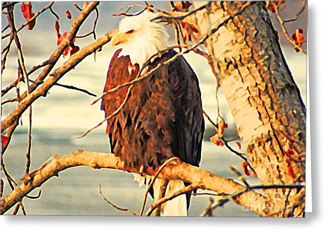 Bald Eagle Perched Greeting Card by Flo Karp