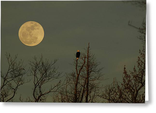 Bald Eagle Watching The Full Moon Greeting Card by Raymond Salani III