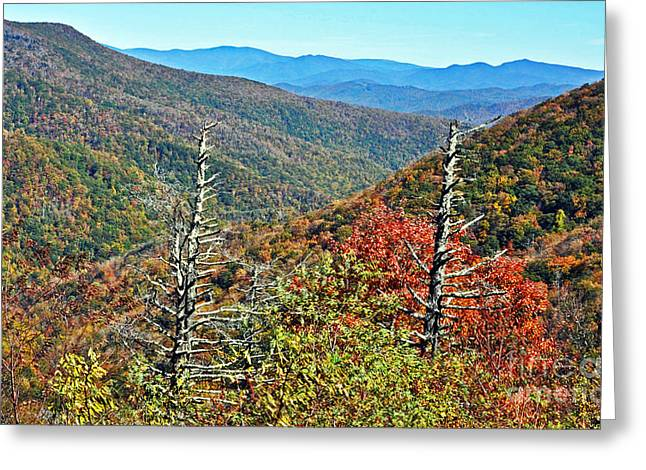Blue Ridge Parkway In Fall Greeting Cards - Bald Knob  Greeting Card by Lydia Holly