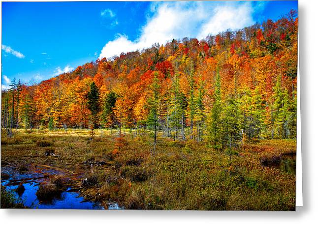 Fall Folage Greeting Cards - Bald Mountain Pond V Greeting Card by David Patterson
