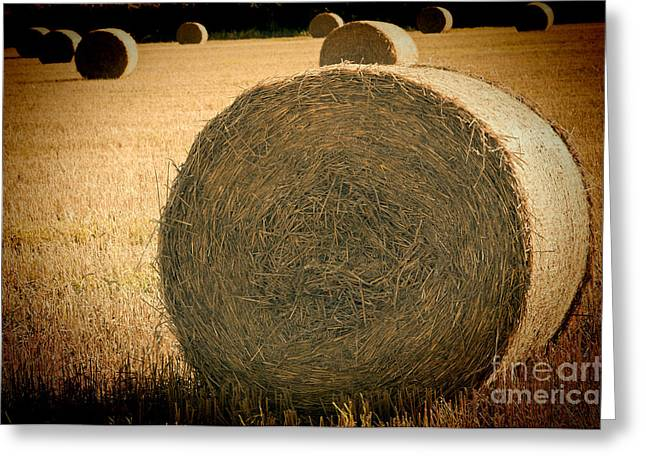 Harvest Time Greeting Cards - Baled Out 2 Greeting Card by Steve Purnell