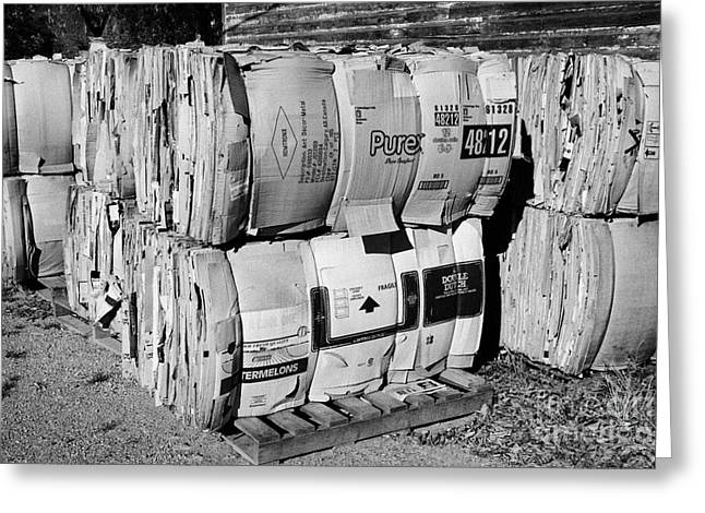 Cardboard Greeting Cards - bales of cardboard for recycling Saskatchewan Canada Greeting Card by Joe Fox