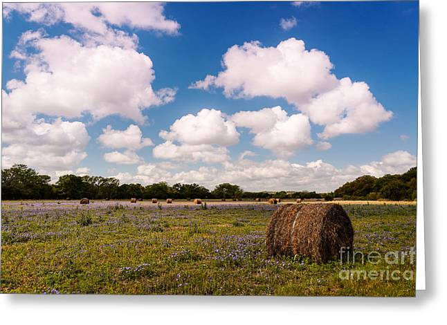 Hay Bales Greeting Cards - Bales of Hale - Quintessential Texas Hill Country - Luckenback Greeting Card by Silvio Ligutti