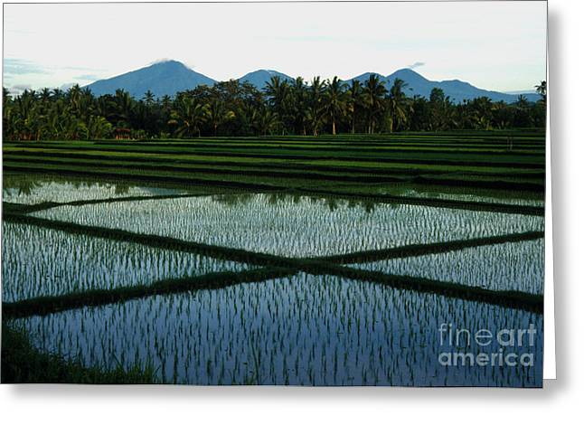 Jerry Rice Greeting Cards - Bali Rice Paddies Greeting Card by Jerry McElroy