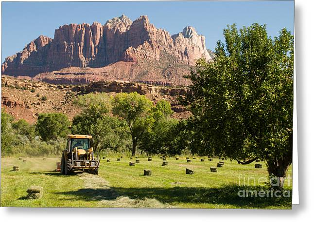 Geobob Greeting Cards - Baling Hay around the Old Apple Tree in Rockville Utah Greeting Card by Robert Ford