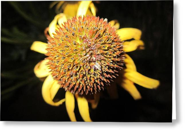 Abstracted Coneflowers Greeting Cards - Ball of Beauty Greeting Card by Mike Podhorzer