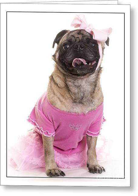 Dogs. Pugs Greeting Cards - Ballerina Pug Dog Greeting Card by Edward Fielding