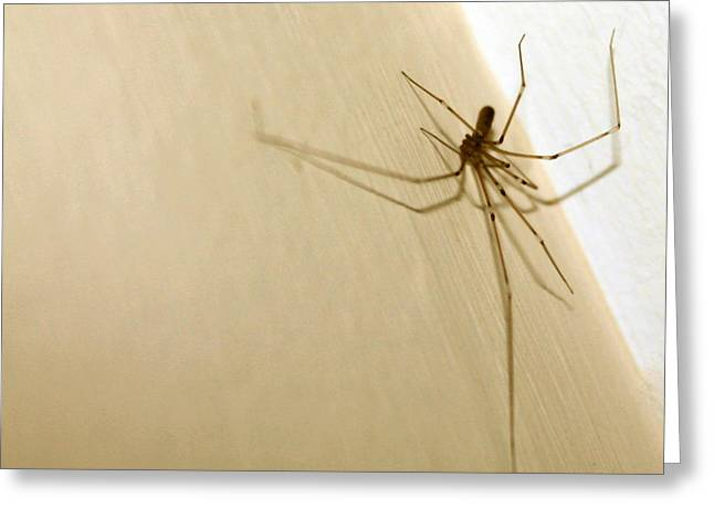 Smart Pyrography Greeting Cards - Ballerina Spider Greeting Card by Mo  Khalel
