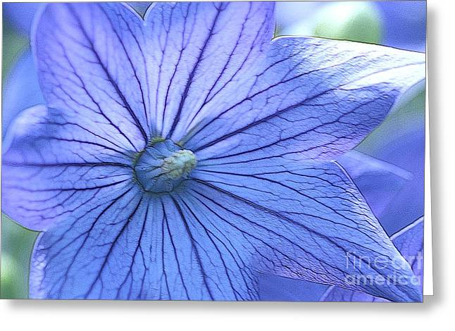 Balloon Flower Greeting Cards - Balloon Flower Enhanced Greeting Card by Corey Ford