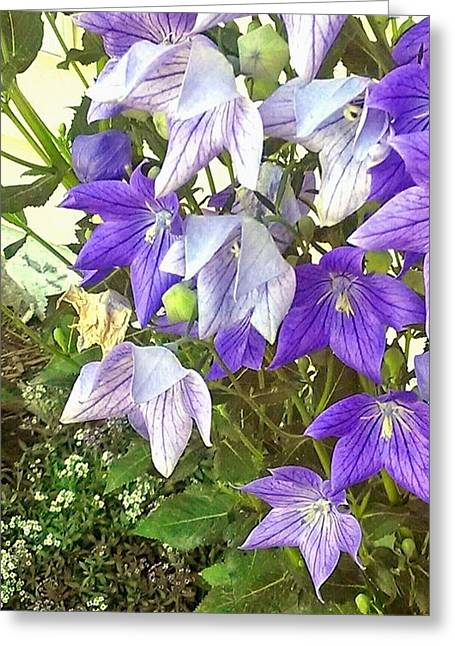Balloon Flower Greeting Cards - Balloon Flowers In Summer Greeting Card by D Baker Soph