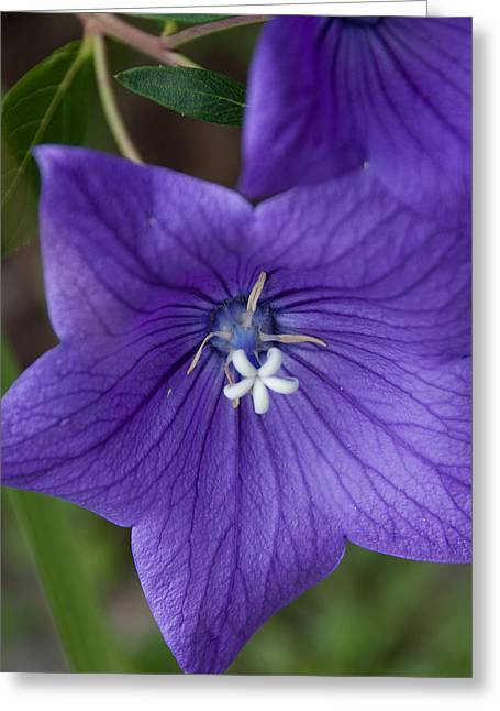 Balloon Flower Greeting Cards - Balloons Greeting Card by Michael Garcia