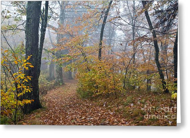 Balsam Greeting Cards - Balsam Mountain Forest Greeting Card by Gregory G. Dimijian, M.D.