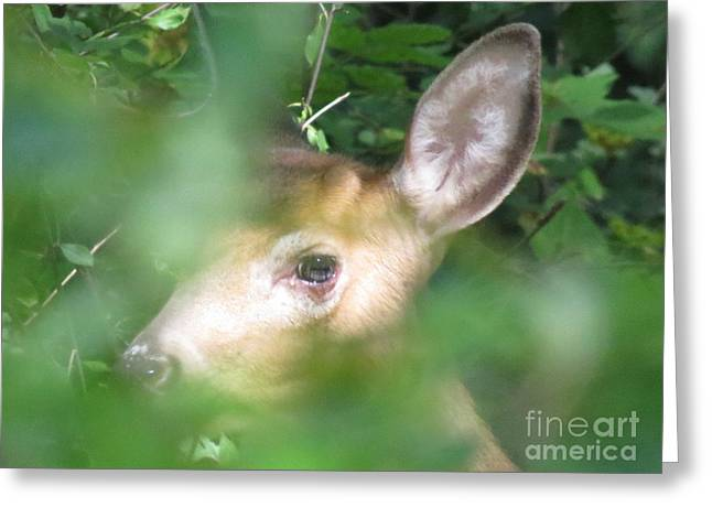 Bambi In The Woods Greeting Card by David Lankton