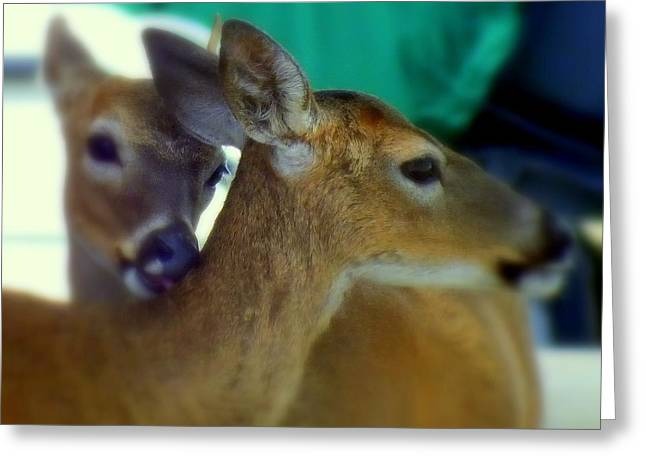 True Friendship Greeting Cards - Bambi Greeting Card by Karen Wiles