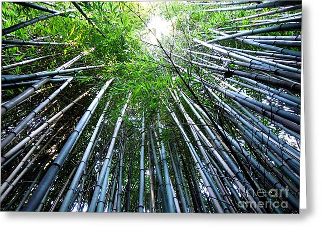 Bamboo Fence Greeting Cards - Bamboo . A Renewable Resource Greeting Card by Renee Trenholm