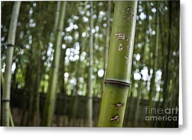 Engraving Greeting Cards - Bamboo Greeting Card by Audrey Wilkie