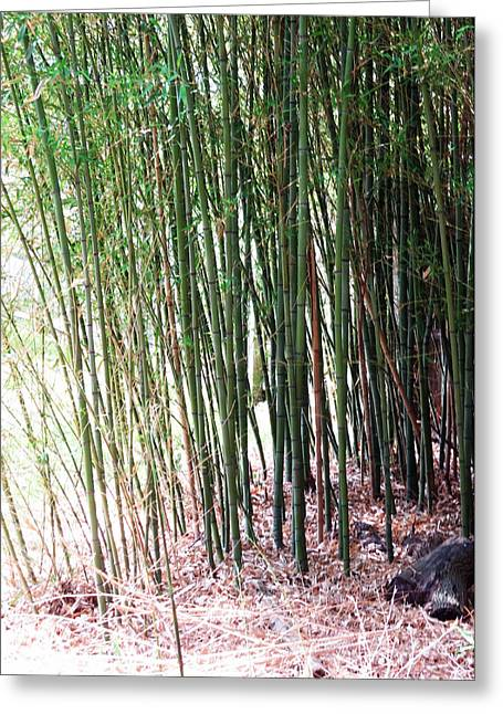 Wife Greeting Cards - BAMBOO by Roadsides Cherry HILL Roadside Greens            Greeting Card by Navin Joshi