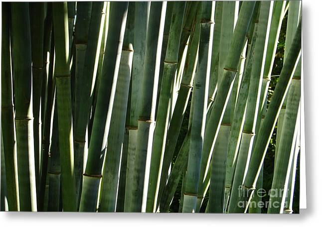 Bamboo House Greeting Cards - Bamboo Canes Greeting Card by Lew Davis