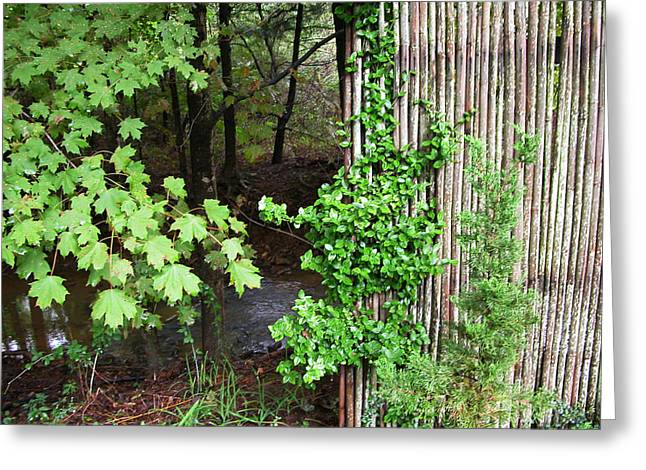 Bamboo Fence Greeting Cards - Bamboo Fence Greeting Card by Daniel P Cronin