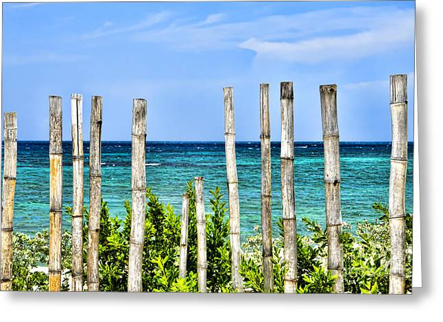 Bamboo Fence Greeting Cards - Bamboo Fence Greeting Card by Keith Ducker