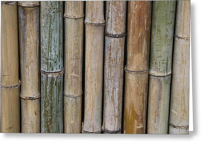 Bamboo Fence Greeting Cards - Bamboo Fence Greeting Card by Tilen Hrovatic