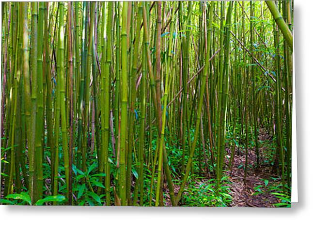 Hawaii Greeting Cards - Bamboo Forest  Greeting Card by Andy Jackson