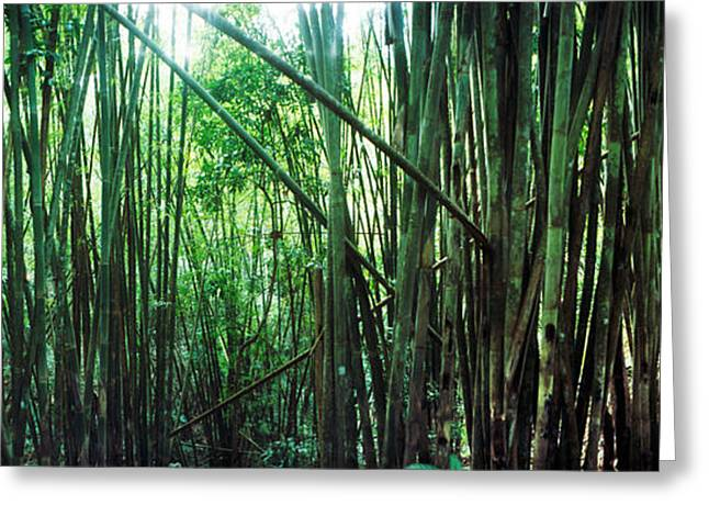 Chiang Greeting Cards - Bamboo Forest, Chiang Mai, Thailand Greeting Card by Panoramic Images