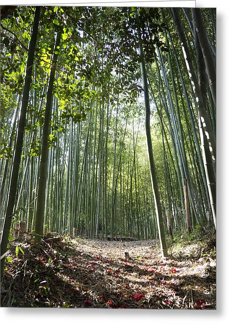 Red Leaves Greeting Cards - Bamboo Forest Greeting Card by John Wong