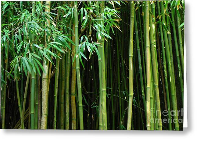 Bob Christopher Greeting Cards - Bamboo Forest Maui Greeting Card by Bob Christopher