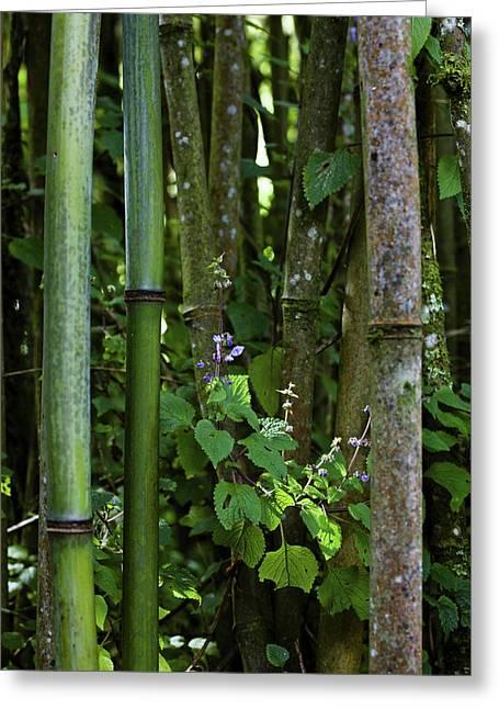 Bamboo Forest, Ruwenzori, Uganda Greeting Card by Martin Zwick