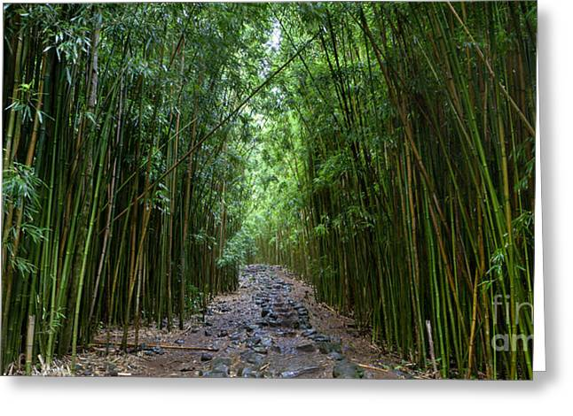 Bamboo Greeting Cards - Bamboo Forest Trail Hana Maui Greeting Card by Dustin K Ryan