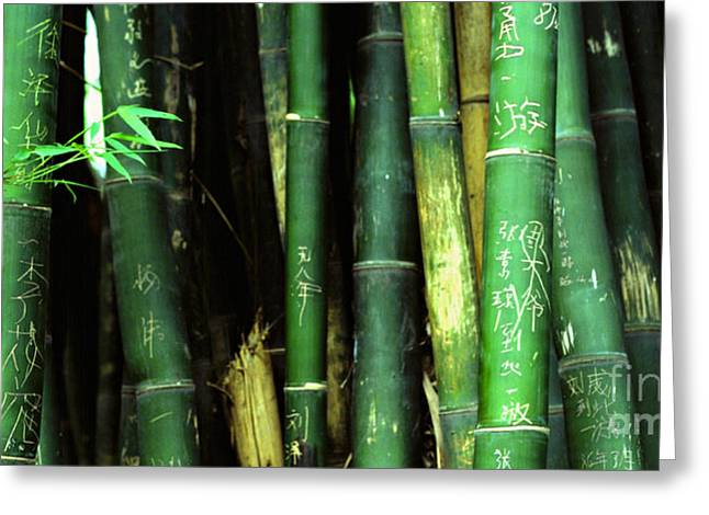 Sichuan Province Greeting Cards - Bamboo Graffiti Pano - Sichuan Province Greeting Card by Anna Lisa Yoder