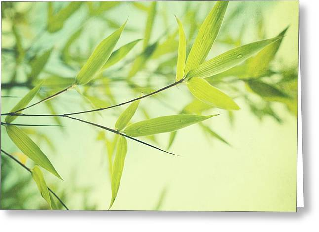 Green Leaves Greeting Cards - Bamboo In The Sun Greeting Card by Priska Wettstein